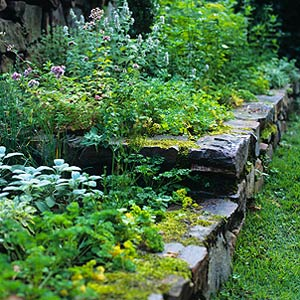 retaining wall herb garden