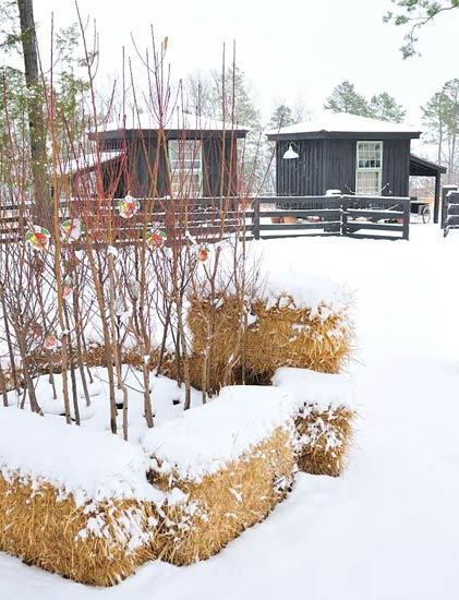 A corral of haybales will protect plants in pots during winter.