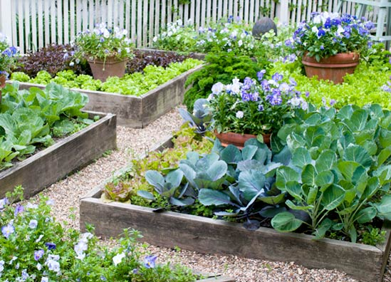 A pot of annuals or colorful vegetables creates a focal point in a raised bed.